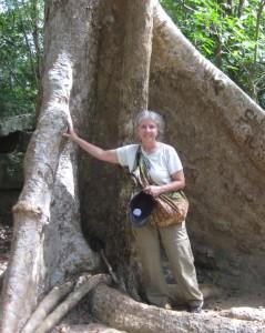 Anita big tree