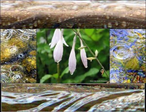 Thanks to Diane Hale Smith for this beautiful photographic collage.