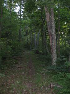 shenandoah national park trail
