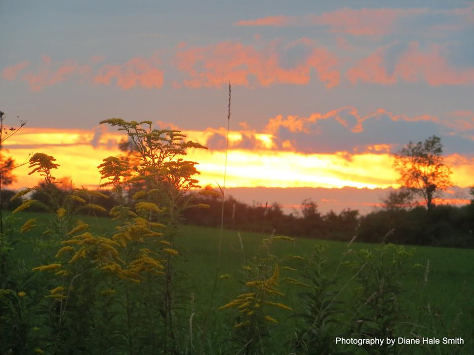 goldenrod sunset diane hale smith
