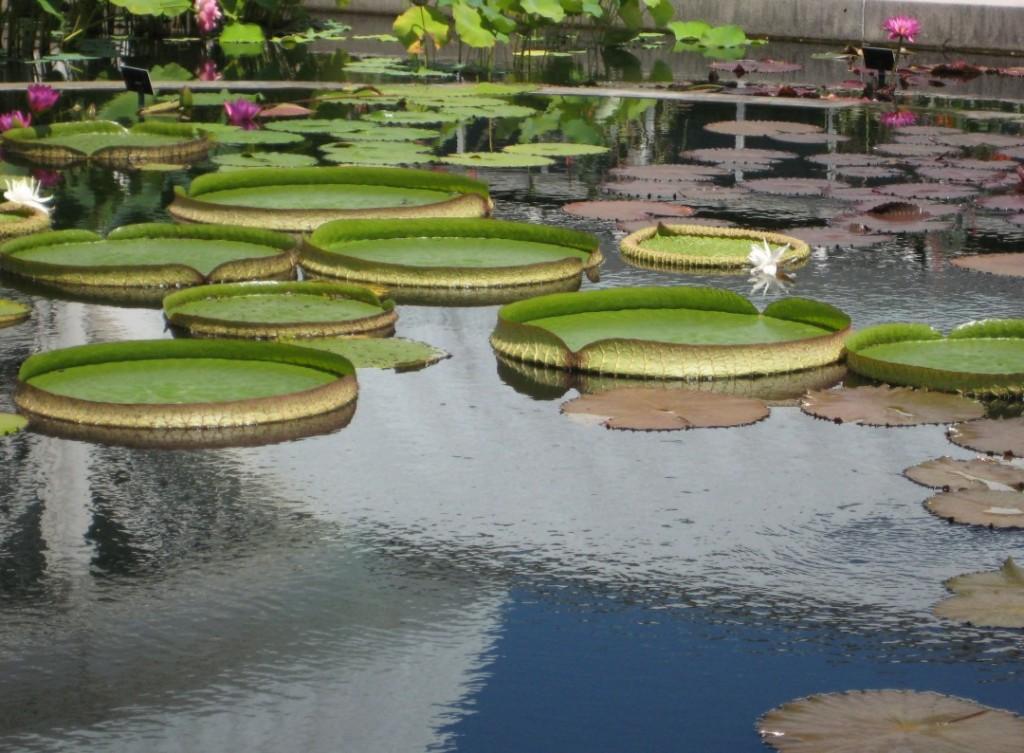botanical garden lily