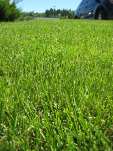 lawn with herbicide