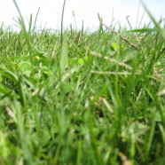 Good Lawn/Bad Lawn