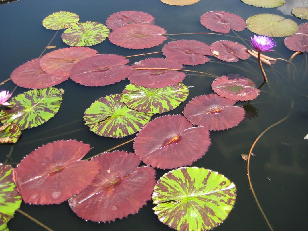 Lily Pad Lifestyle