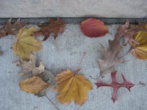 leaves 232
