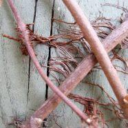 Poison Ivy: Hairy Vine, A Danger Sign