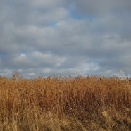 Goldenrod: Fill Up the Feeders