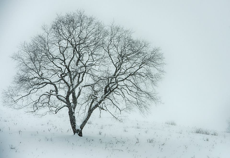 wells horton tree in the snow