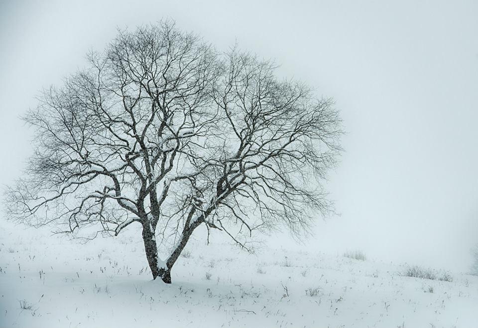 wells horton tree in the snow