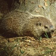 Merry Groundhog Day