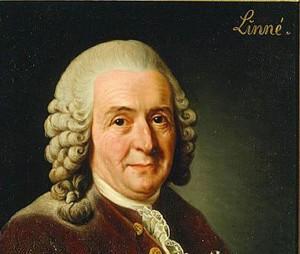 3-Linnaeus