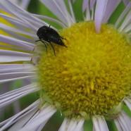 Happy National Pollinator Week!