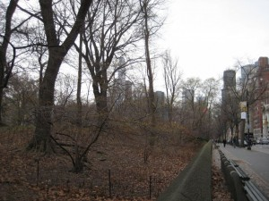 witch hazel in Central Park