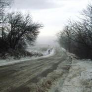 Living Snowfence
