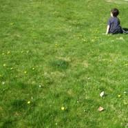 Good Lawn