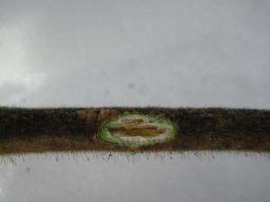 sumac nibble