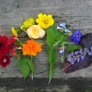 Rainbow of Flowers: Same-Sex Marriage