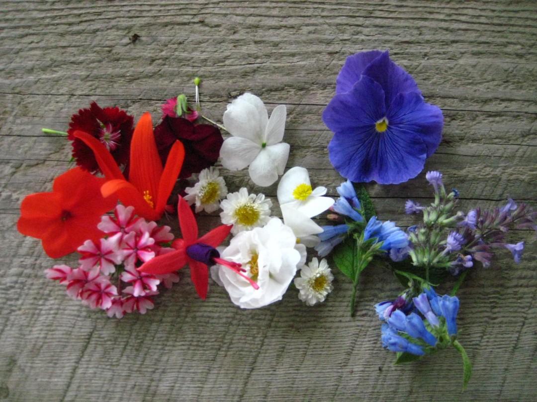 redwhiteblue flowers