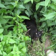 Catnip: Cats Behaving Badly