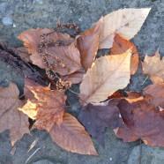 Seeing Brown: November Leaves