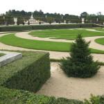 Poison ivy grew in the manicured gardens of Versailles.