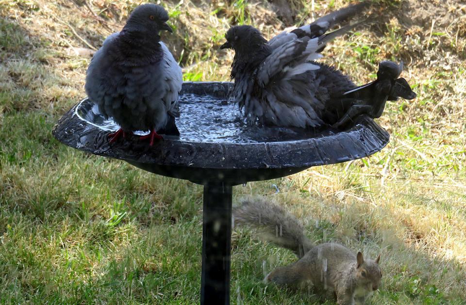 diane hale smith squirrels pigeons