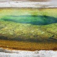 Yellowstone Hot Springs: Extremophiles