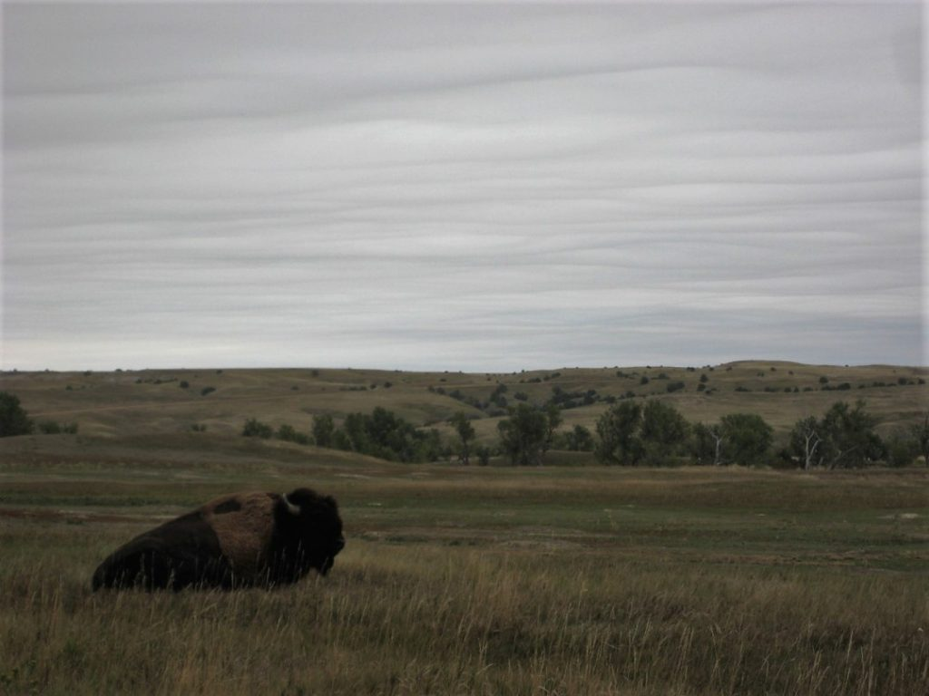 buffalo badlands