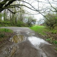 In Praise of Puddles