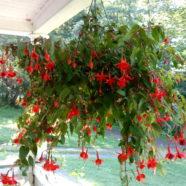 Why Hummingbird Feeders Are a Terrible Idea