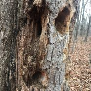 Faces in the Forest