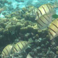 Samoa: Fish-Watching
