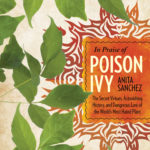 in praise of poison ivy sanchez
