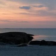 Rachel Carson In Maine: The Salty Garden