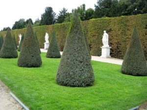 versailles trees