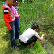 Science Outdoors: Close Encounters